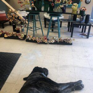 our art centre mascot BO loving the cool floor